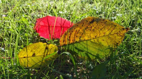 Herbst, Sonne, Herbstsonne, Blätter, Rasen, Lampen Henrich