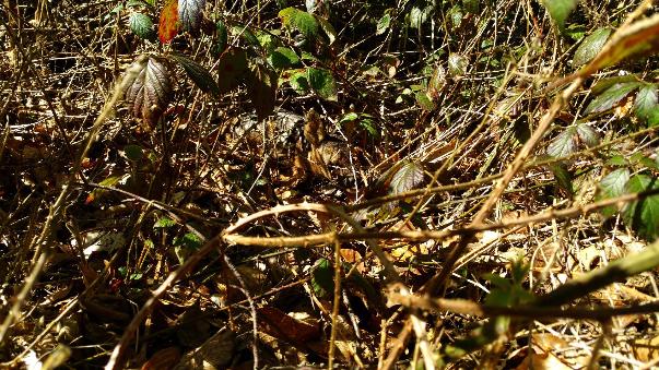Binger Wald Rehkitz Lampen Henrich